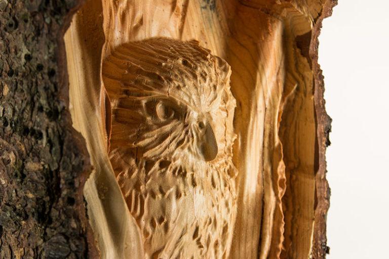 Tim-Lothe-Owl-IMG_0120-768x512-1
