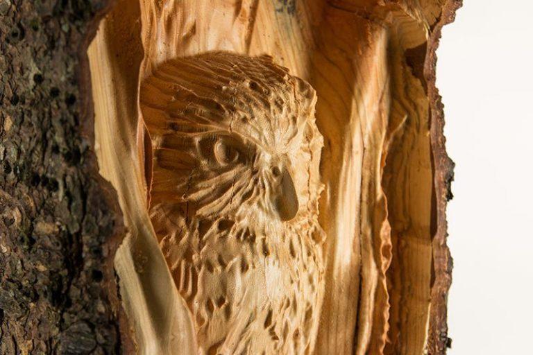 Tim-Lothe-Owl-IMG_0120-768x512-2